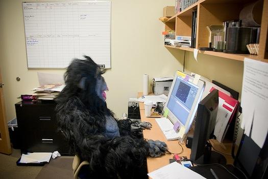 monkey at computer